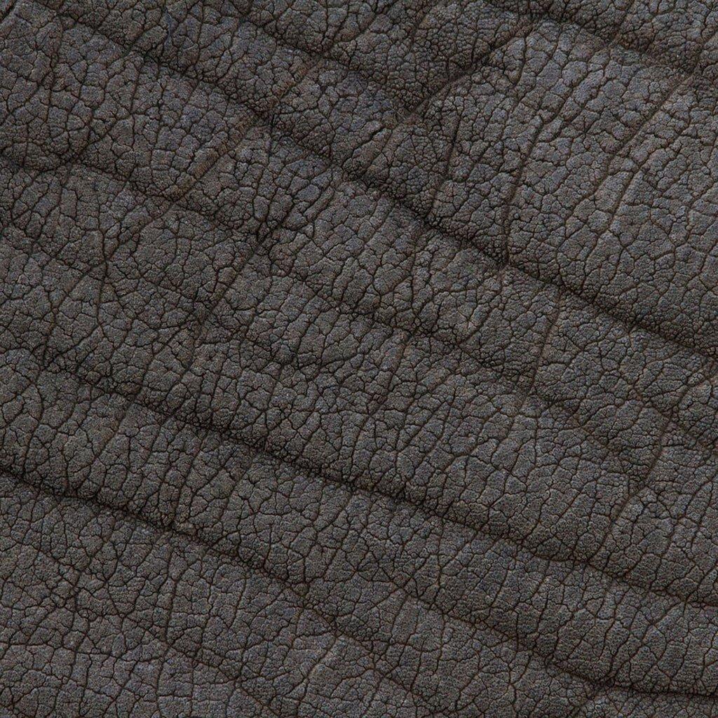 closeup-photographs-of-animal-skin-african_elephant
