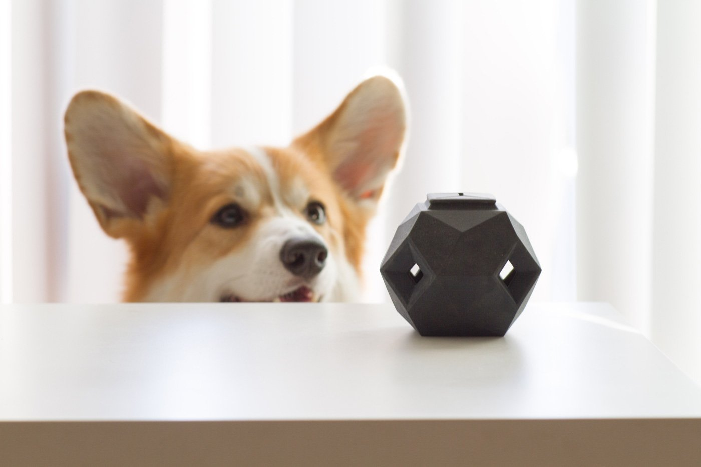 Puppy Toys For 10 And Up : Minimalist treat dispensing puzzle by up dog toys