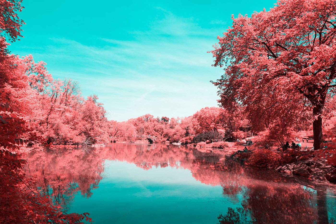 infrared_photography_nyc_central_park_paolo_pettigiani_gessato_7